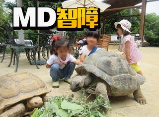 逃跑了半个月,这只乌龟才走了140米