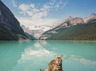 明明是只豹确都是说是只猫,看完都想养一只