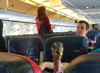 出来混怎么能不知道飞机上会遇到的这些奇葩事