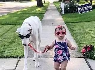 17个月的小女孩和残疾狗相伴成长,一起散步的样子萌翻了