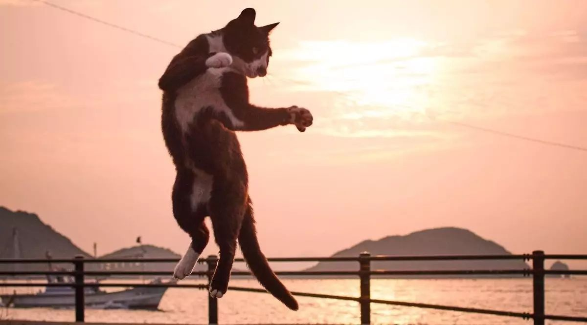 在这个日本摄影师的镜头下,猫咪个个都是武林高手。看这拳法,你怕了吗