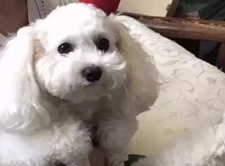 今天才知道,狗也会抽筋!