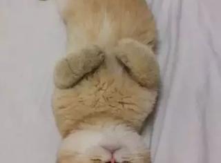 网友回家打开门发现猫霸占了他的床,还睡得很香就是这么嚣张...