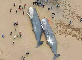 鲸鱼搁浅与太阳风暴之间的神秘联系