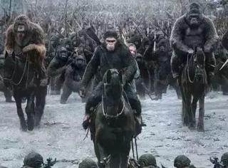 不了解黑猩猩的这7个知识点你怎么能真的看懂《猩球崛起》