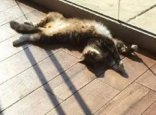 这猫每天吃喝玩乐,竟因这个变成了慈善家,可牛B坏了