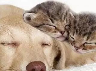 家里同时养一只猫和一只狗是怎样一种体验?