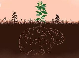 植物有隐藏的记忆?