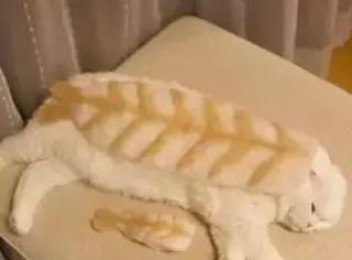 网友用猫掉的毛给猫们做帽子