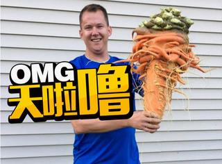 生活太无聊,他种出了这个世界上最大的胡萝卜