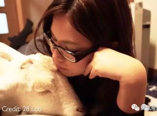一个日本女人和一只羊的故事