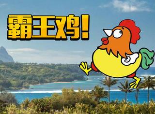 当鸡在这座岛上称王称霸,emmm你会选择红烧还是清炖?