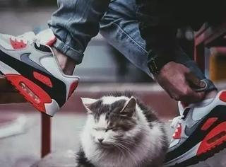 也许你是一个喜欢球鞋的铲屎官?