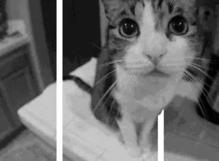 这些3D猫动图实在太萌了,让人忍不住想亲屏幕...