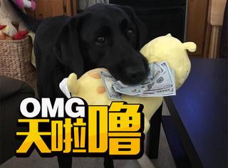 5岁的狗狗就知道凭借可爱赚钱啦,看着口袋空空的自己有些扎心!