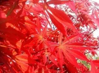这些拍秋景的摄影技巧,竟如此实用!