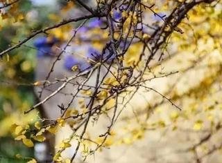 一到秋天,南京就美成了金陵……