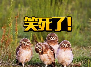 原来还有喜剧野生动物摄影奖,这些照片也太搞笑了!