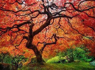 秋天有多美?这组对比图来告诉你