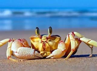 从古到今的螃蟹一直这么贵吗?