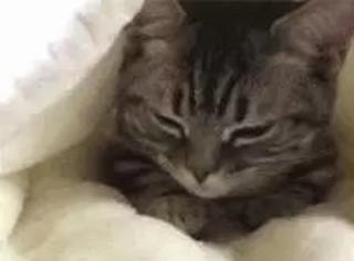 主人去叫猫起床,但猫不愿意起就躲在被子里,像极了今天的你...