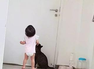 小主人想要开门出去玩,但够不着门把手,猫看不下去了,于是...