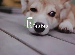 自从养了狗,我又恋爱了