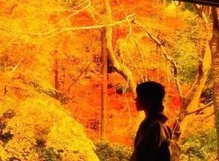 枫迷京都 | 告别人从众,在这里变身追枫少年