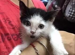 刚救助了只流浪小猫,还没来得及做隔离,大猫看到后...