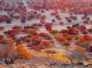 当国庆热门景区被挤爆时,国内还藏着一片比日本美100倍的6万亩枫叶林