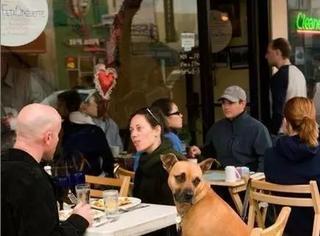 英国开放专门给狗狗和主人的游泳池,和心爱的萌宠在一起才是最幸福的时光