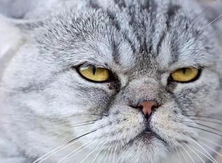 家猫并不能真的理解人类?