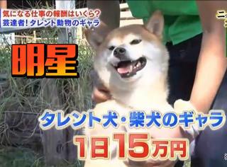 日本动物经纪公司价格曝光,这身价比你贵多了