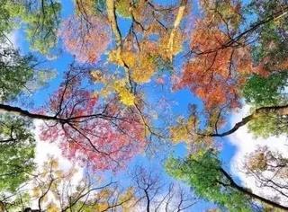 为什么说秋天出门要带相机?附秋季最实用摄影技巧!