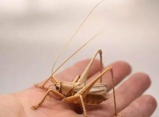 难以想象这些都是昆虫都是竹子做的