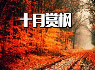 红色的十月,再不来四川赏枫叶,可就要来不及啦!