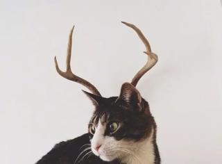那些年毫无违和感突然长出鹿角的猫,感受下帅炸了
