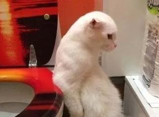 网友拍到家里猫站着拉屎,网友们不淡定了...