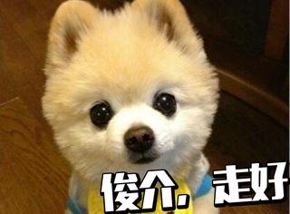 它是初代萌宠网红狗狗,曾拍过广告、登过杂志,但现在去世了...