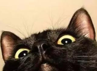 付出身心为猫主子治疗焦虑症,然而那竟然不是我的猫…尴尬
