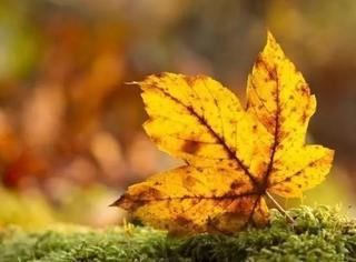 秋叶那么美,谁还看花?
