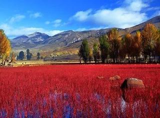 """四川这12个地方""""红了"""",最美红叶错过又要等一年"""