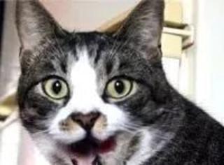 你知道,什么是后天性失猫综合症吗?