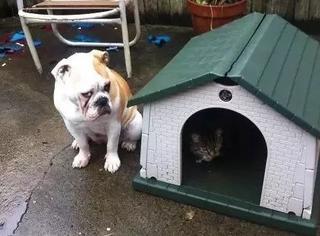当初养了猫和狗,现在只想离家出走