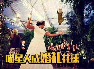 """你见过新娘在婚礼上抛""""猫球""""的吗?"""
