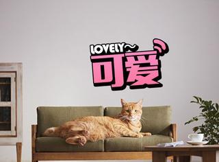 过得不如喵,连猫咪都有了专属自己的家具