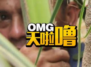 菲律宾大叔爬上18米高椰子树呆了3年,妈妈送吃送喝