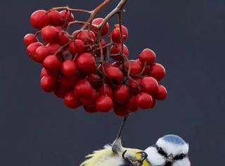 搞定最难的拍摄对象!50张最佳鸟类摄影作品