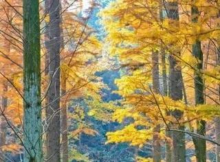 """面积达2万多亩的它,屡次被评为""""杭州十大不为人知的秋色秘境"""",下个月去美炸了!"""
