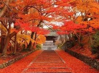如果一生只能去一次日本,那我选秋天的京都!